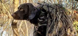 performance dog foods give retrievers energy  waterfowling