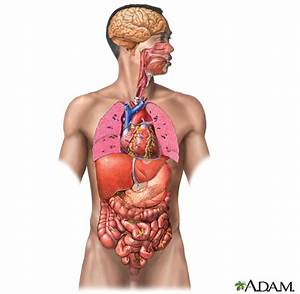 Free Organs  Download Free Clip Art  Free Clip Art On