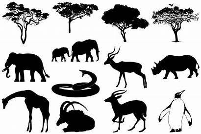 Animal Silhouettes Wild African Eps Ai Illustrations