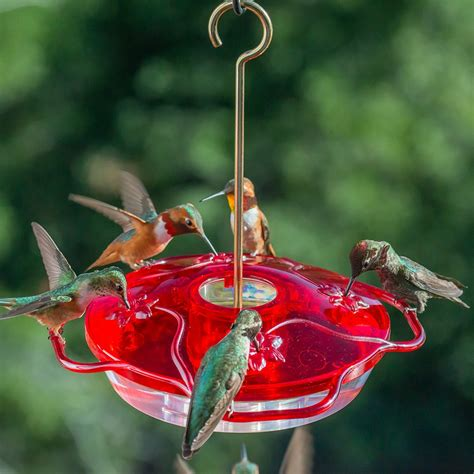 hummingbird feeder little flyer 4 hummingbird feeder lf 4 droll yankees