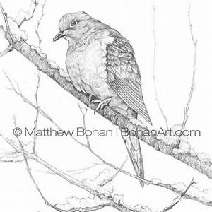 17 best ideas about Dove Drawing on Pinterest | Pretty ...