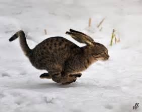 Running Dwarf Cat Kittens