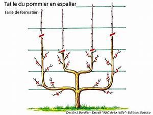 Comment Tailler Un Pommier : comment tailler le pommier en palmette ~ Dode.kayakingforconservation.com Idées de Décoration