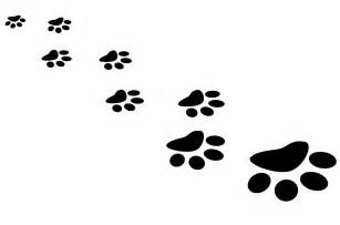 cat prints paw prints free stock photo domain pictures