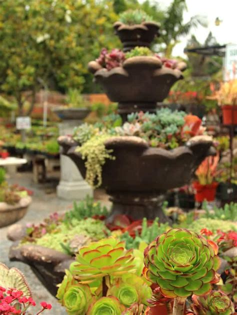 beautiful succulent gardens how to plant beautiful succulent gardens in 5 easy steps a piece of rainbow