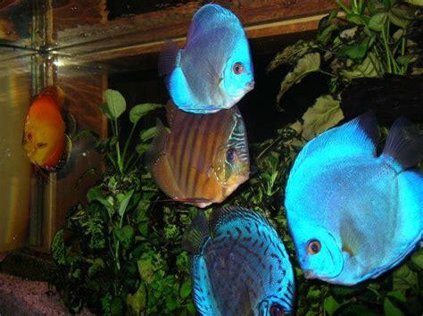 achat poisson eau douce poisson naturel