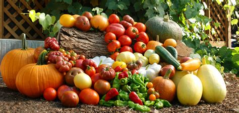 garden of meal the best winter crops and cold hardy foods to grow