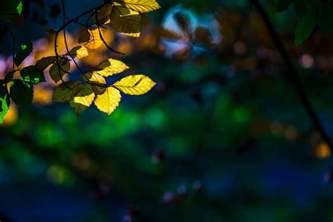 close  tree leaves leaf yellow macro blur bokeh