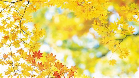 Fall Backgrounds Laptop by Free Hd Fall Wallpapers Make Your Screen Shine Brighter