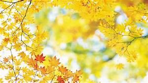 Download Autumn Leaves Wallpaper 1920x1080 | Wallpoper #390091