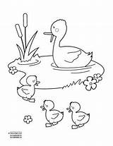 Pond Duck Coloring Pages Drawing Ponds Ducks Clipart Quiet Bee Printable Getdrawings Books Play Wood Print Sc Kid Getcolorings sketch template