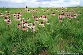 BiomesPS17 - Grassland...