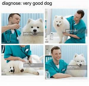 Diagnose Very Good Dog Gettyimages Getty Images Getty Ima ...