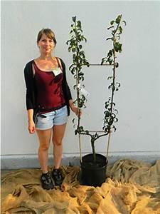 Walnussbaum Selber Pflanzen : obstspalier anlegen excellent with obstspalier anlegen ~ Michelbontemps.com Haus und Dekorationen