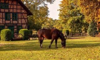 farm horse bauernhof dem fattorie fattoria paard dieren didattiche brown eco farms virginia animals cosa sono field natura friendly afbeeldingen