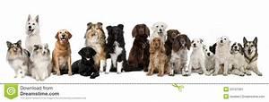 Gruppo di seduta dei cani immagine stock Immagine di animali 25101351
