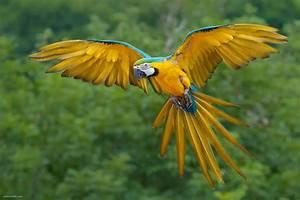 Birds | Animals planet