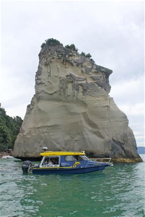 Glass Bottom Boat Que Significa by Glass Bottom Boat Whitianga 2018 Ce Qu Il Faut Savoir