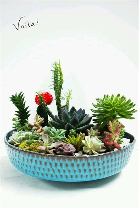 best 25 outdoor cactus garden ideas on cactus