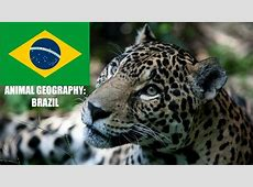 Brazil National Animal Pictures to Pin on Pinterest