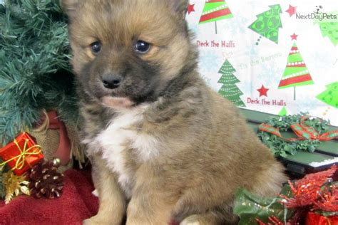 Meet Male A Cute Mixed/other Puppy For Sale For 0