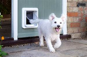 Should you get a dog door for your cockapoo cockapoo hq for Should i get a dog door