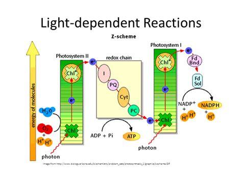 dependent definition light dependent reactions ppt Light