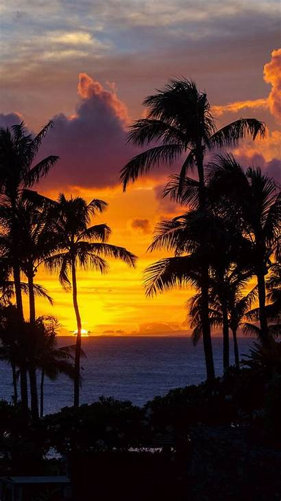 Ocean Sunset Palm Trees Night Tropics Background