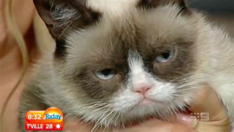 ny times pubs hilarious obit  internet meme star grumpy cat