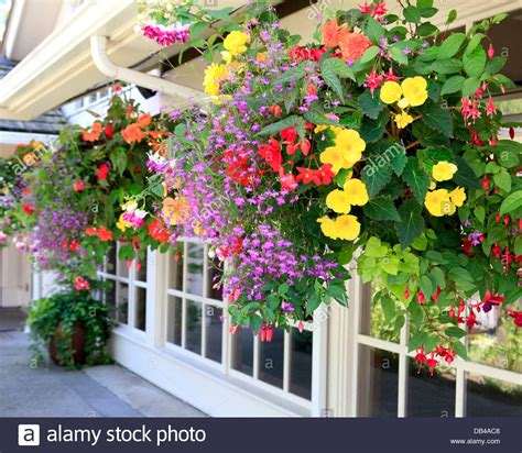 Flowering House Plants For Windows by Many Hanging Baskets With Flowers Outside Of House Windows