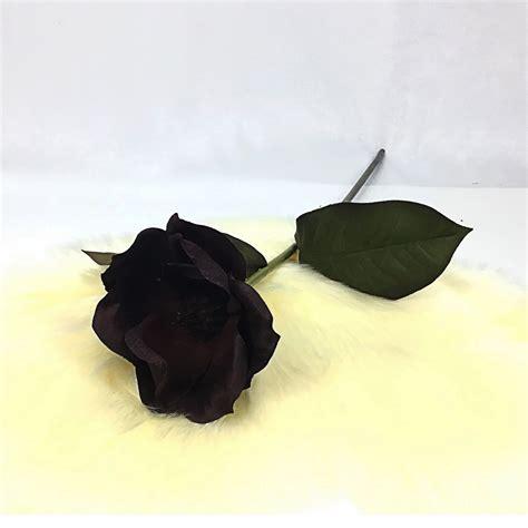 แมกโนเลีย Magnolia-burgundy