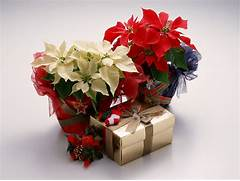 Christmas Gifts Ideas For People You Treasure The Most  Best Birthday Wishes