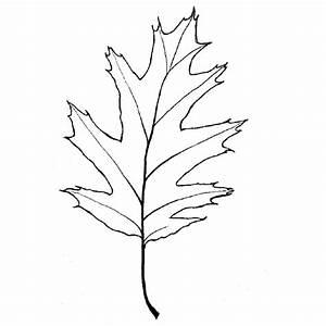 Feuilles D Automne à Imprimer : la nature en coloriage feuille d 39 automne page 2 ~ Nature-et-papiers.com Idées de Décoration