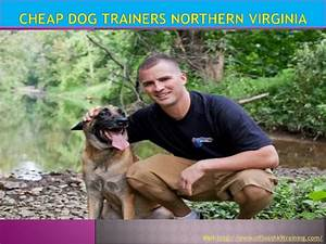 Cheap dog trainers northern virginia for Cheap dog training