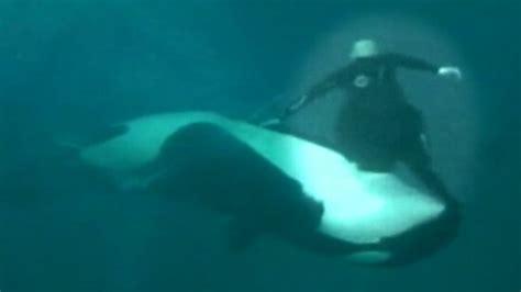 Chilling Video Shows Moment Seaworld Killer