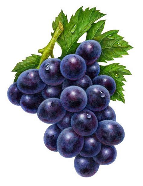 purple grapes clipart big  fruit clipart everyday