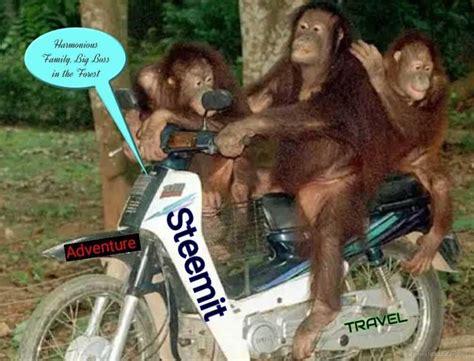 Animal Behavior Similar To Humans — Steemit
