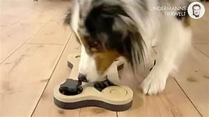 Hunde Intelligenzspielzeug Selber Machen : hundespielzeug selber machen intelligenzspielzeug dog it yourself 5 youtube ~ A.2002-acura-tl-radio.info Haus und Dekorationen