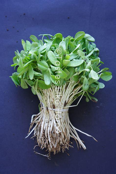Image Gallery Methi Leaves