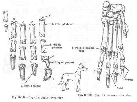 merrilys animal science journal notes  veterinary