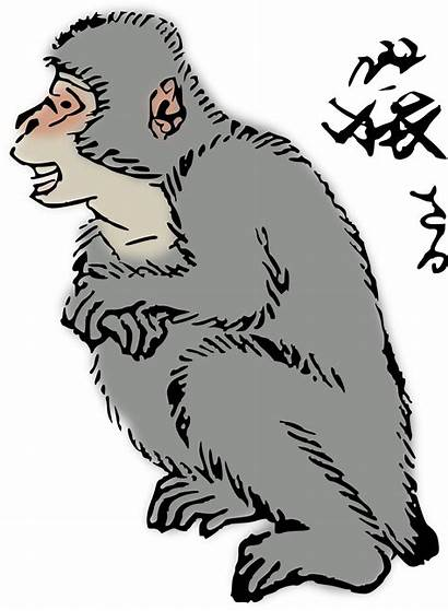 Clipart Japanese Squirrel Macaque Svg Vector Clipground