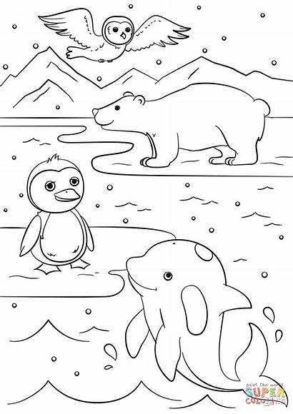 Coloring Winter Animals Pages Drawing Worksheet Printable