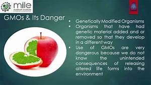 Gmo U0026 39 S  Genetically Modified Organisms  Are Dangerous For