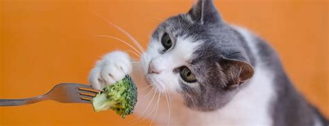 can cats have broccoli cheddar soup
