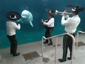 Dancing Animals   Animals