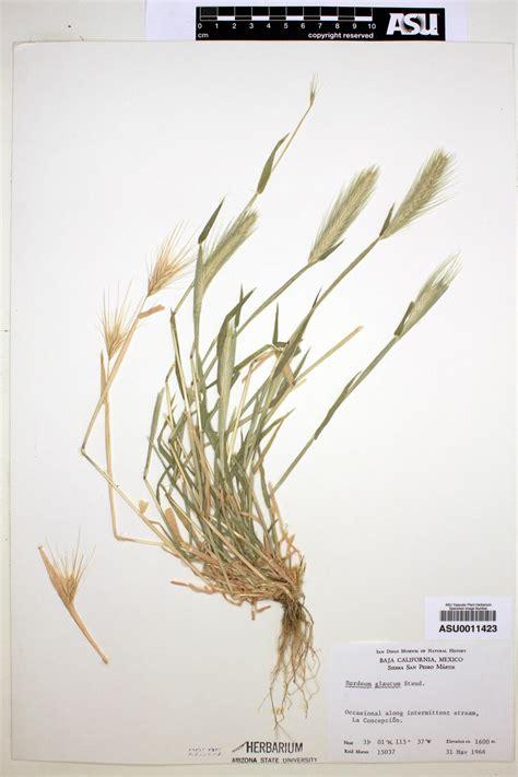 http://swbiodiversity.org/seinet/taxa/index.php?taxon=11500