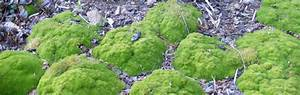 Plante Pour Jardin Japonais : plantes pour jardin zen l 39 univers du jardin ~ Dode.kayakingforconservation.com Idées de Décoration