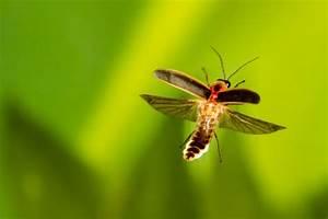 Firefly Org