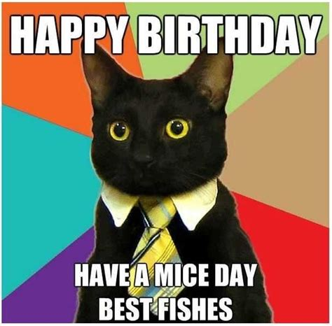 Birthday Gift Meme - top 10 cat happy birthday meme broxtern wallpaper and pictures collection