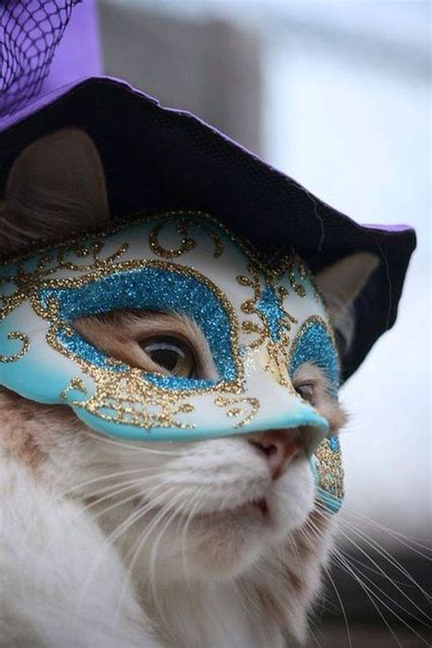 venetian cat mask 1000 ideas about cat mask on mask